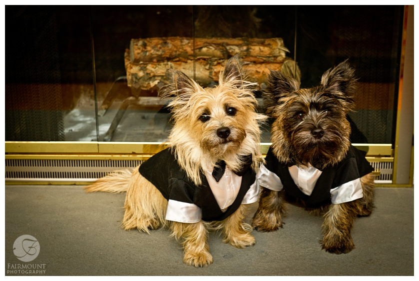 Dogs in tuxedoes