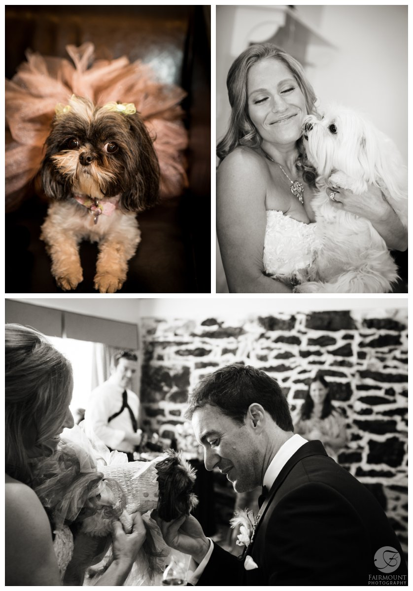 dog flowergirl and dog ringbearer get extra attention from bride & groom