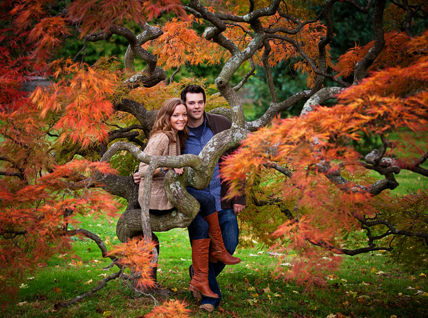 Japanese Maple Tree in fall with couple sitting on branches