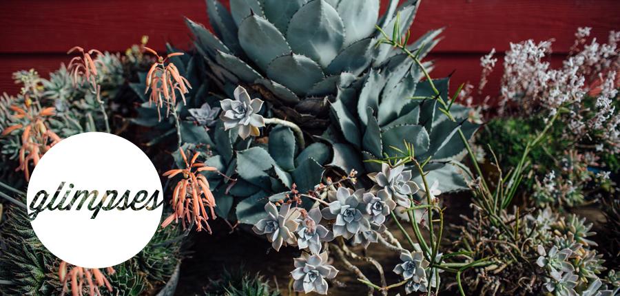 glimpses-succulents.jpg