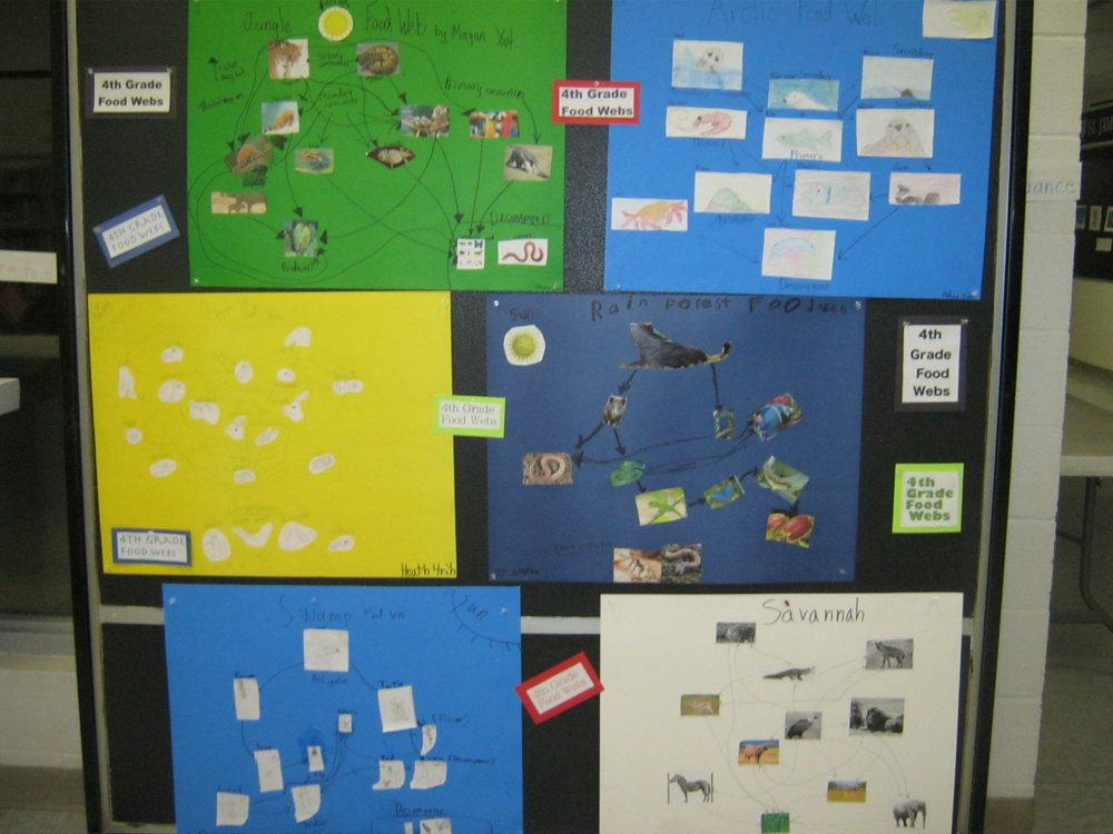 Some 4th Grade Food Webs