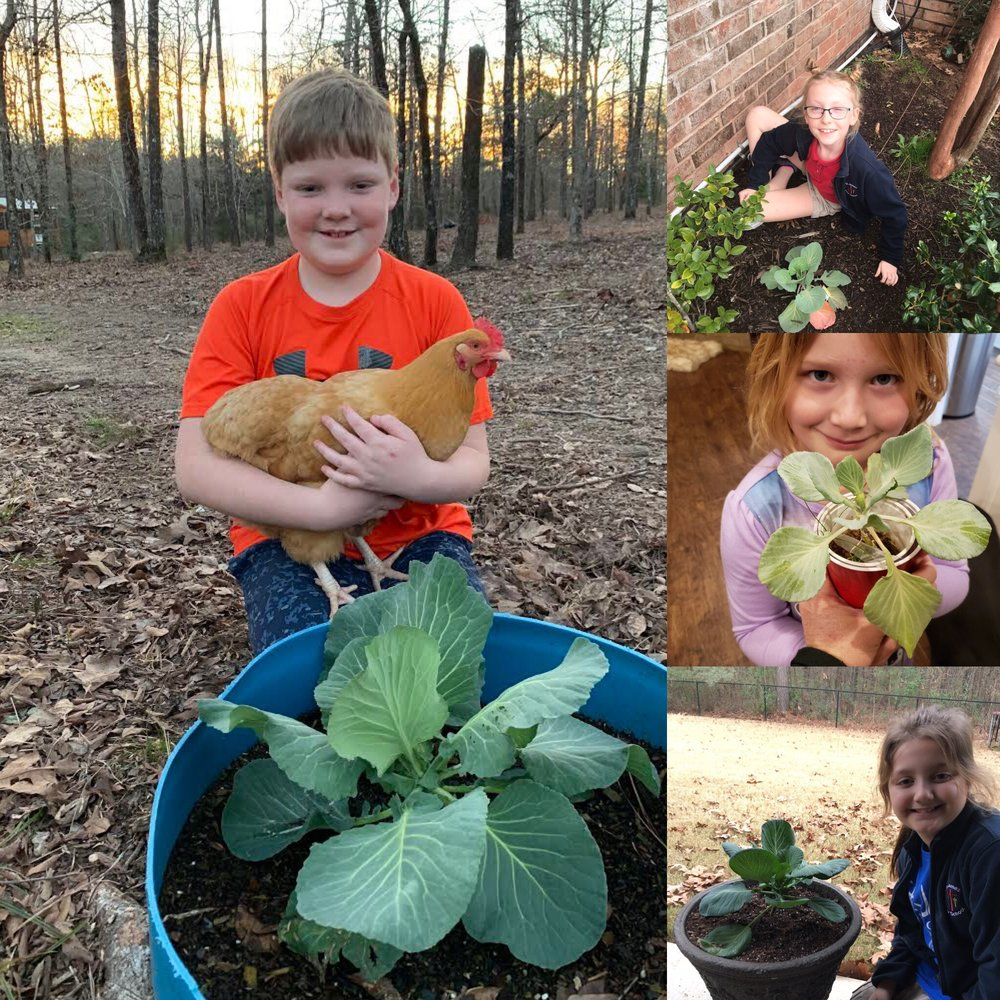 Congratulations to our classmates who nurtured and grew successful cabbage plants!