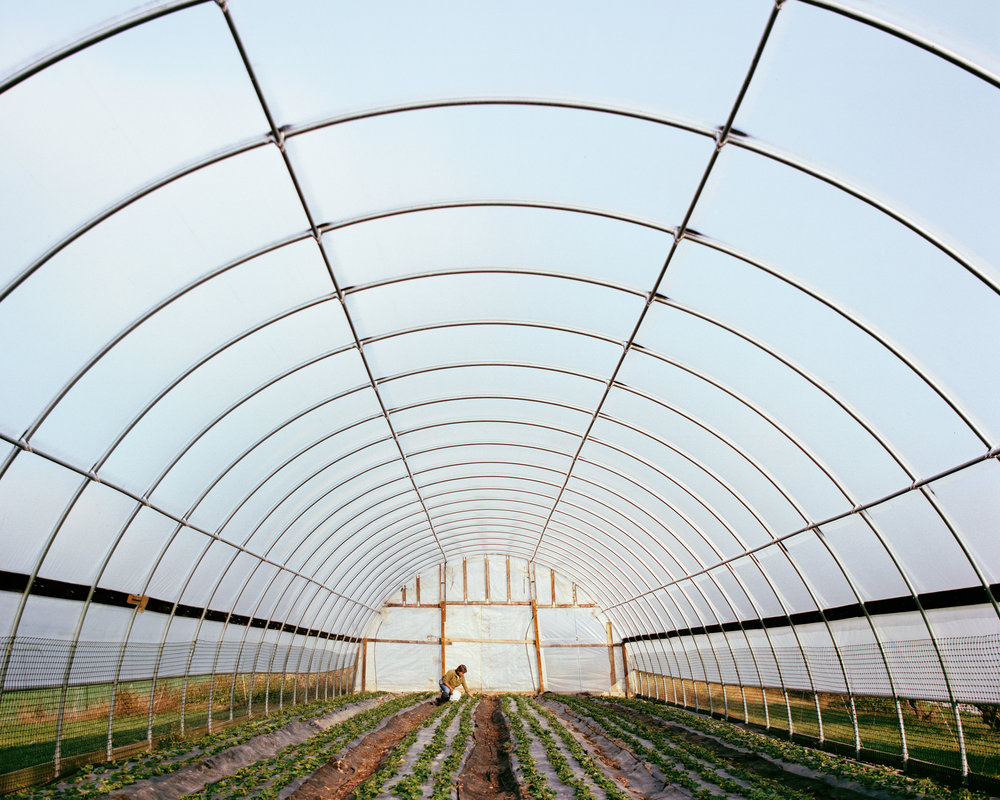 High Tunnel Harvest