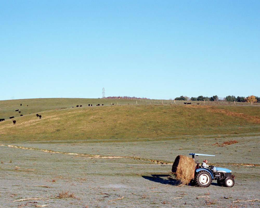 Laura Feeding the Cows