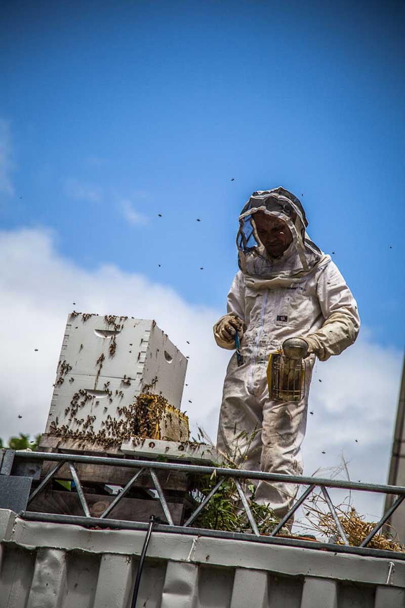 Bees-at-TG-03.jpg