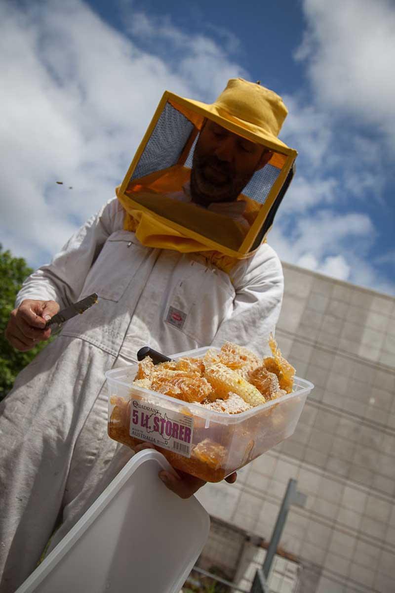 Bees-at-TG-04.jpg