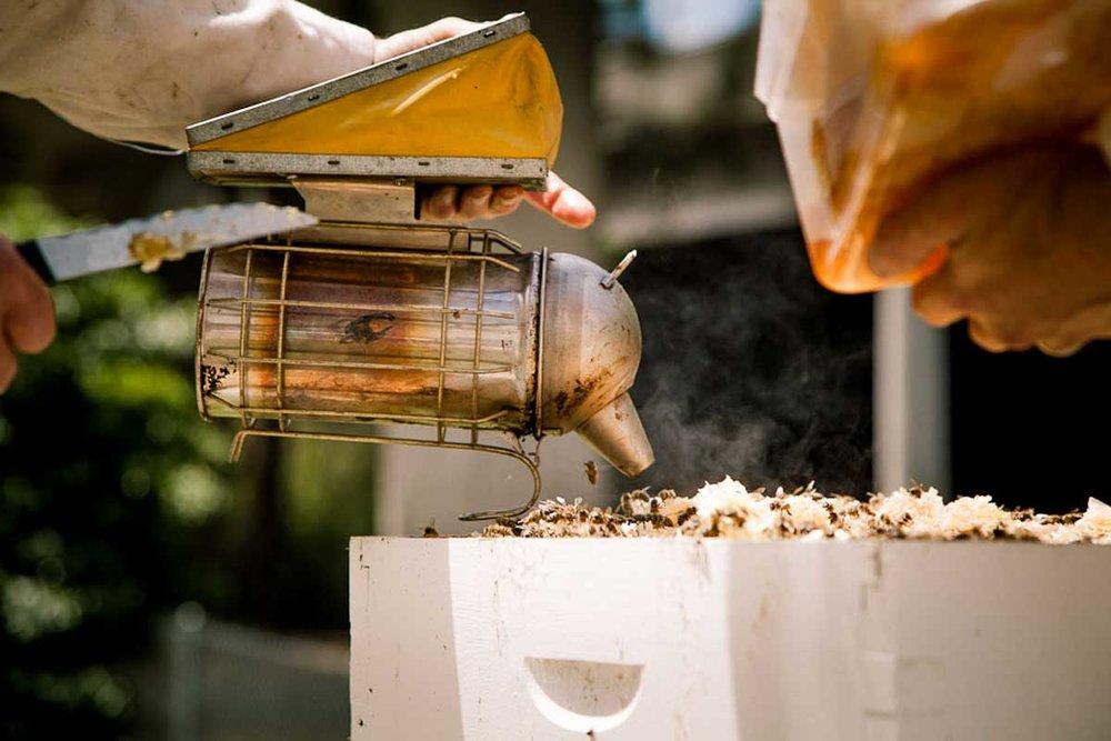 Bees-at-TG-05.jpg