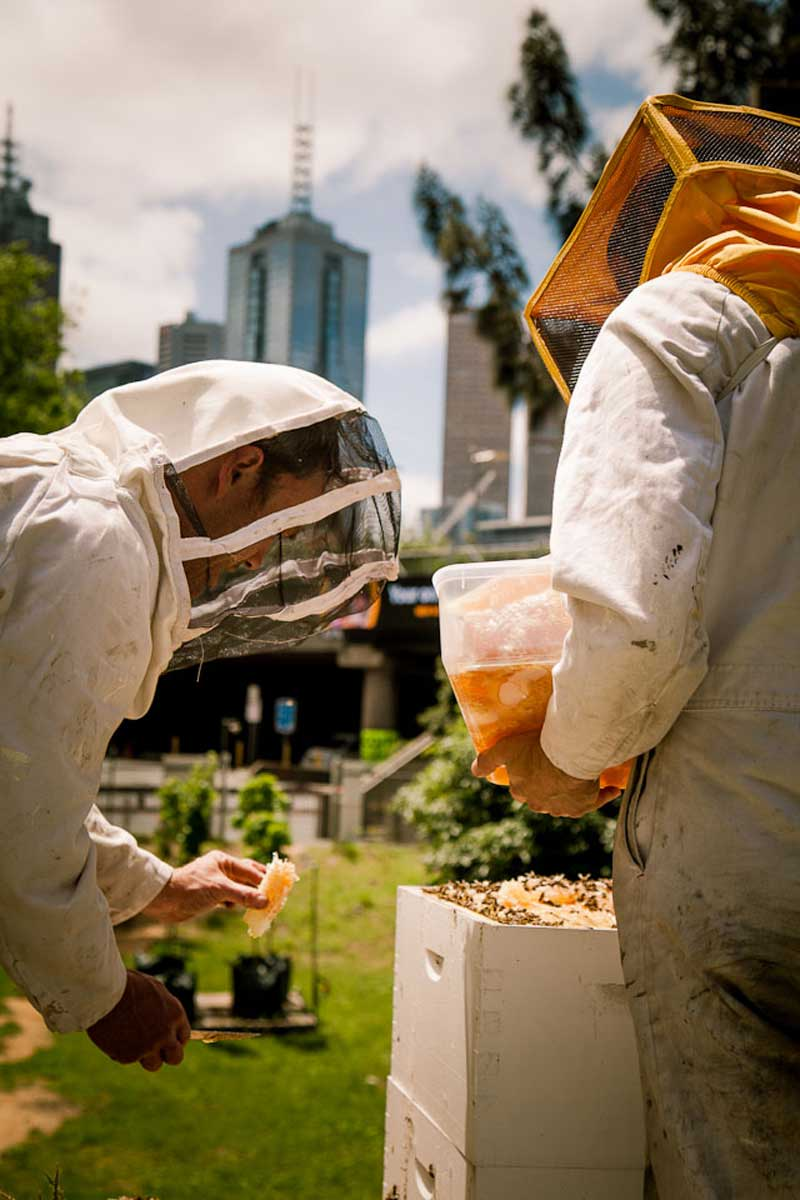 Bees-at-TG-06.jpg