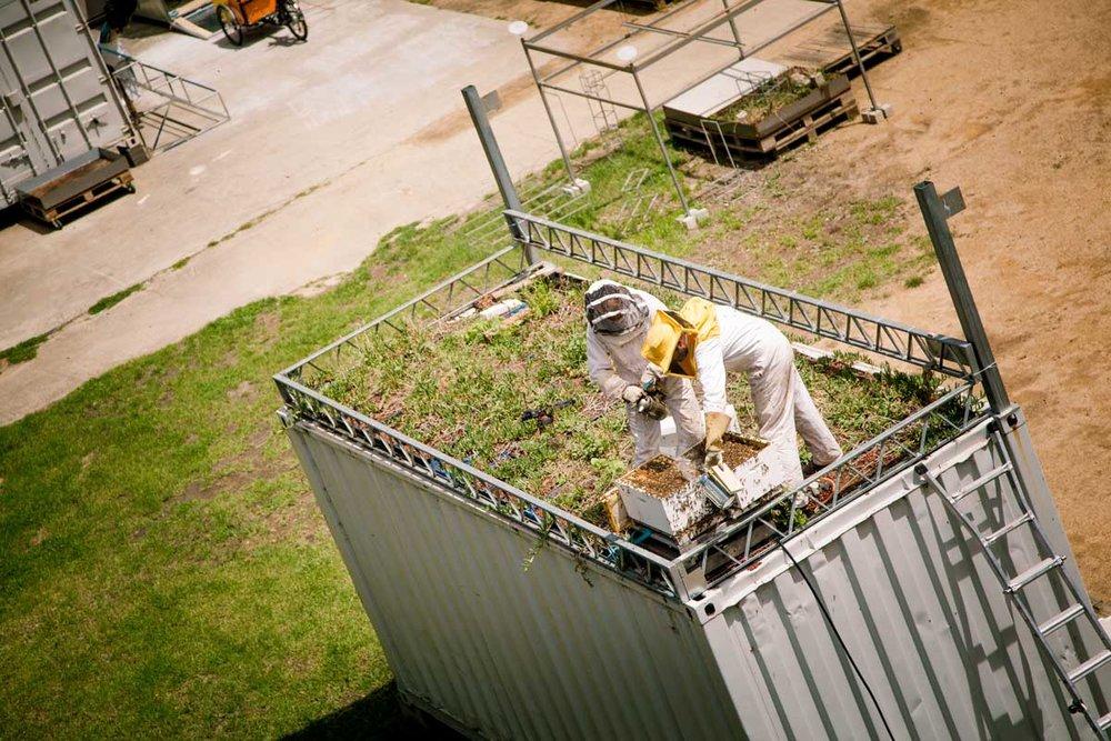 Bees-at-TG-10.jpg