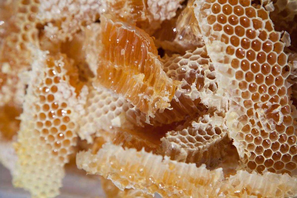 Bees-at-TG-12.jpg