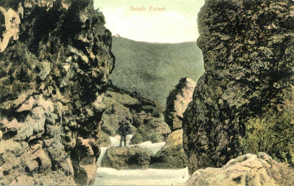Beech Forest 1905.jpg