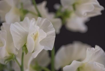 Photo credit: Flowerona Blog