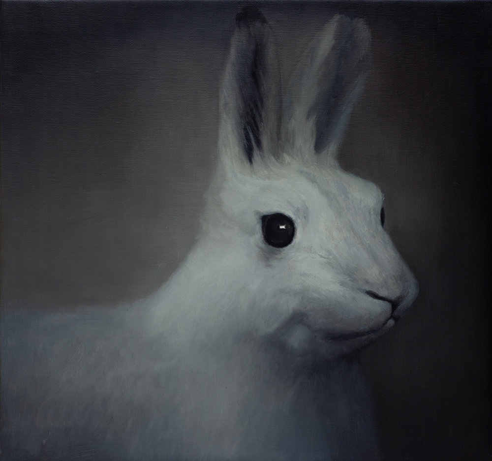 SIMON KENNEDY  Rabbit  2011 oil on linen 38 × 40 cm