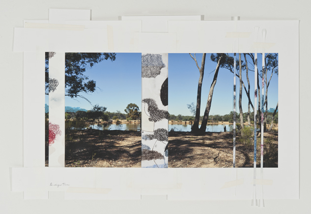 DENISE GREEN  Bendigo Trees  2015 one photograph and five drawings 45.7 × 66 cm