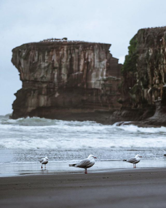 Hoooorray. Some gulls chillin at the beach! That's all! Some mood today! Have a great weekend guys! . . . #moodysky #moody_nature#travelworld #gsaroamers #moodbooster#moodynature #moody_nature#adventureanywhere #adventurealways#adventureculture #theimaged #realmiddleearth #newzealandvacations #soft_vision #main_vision #nzmustdo#folkmagazine #wondermore#roamtheplanet #diewocheaufinstagram#folkscenery #folkgreen #exploretocreate#agameof10k #vzcomood#wanderlustofnz #eclectic_shotz #sonyalpha #drcapture#wonderlustnewzealand #destinationnz