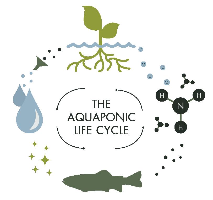 Learn_Aquaponics_Artboard 1.png