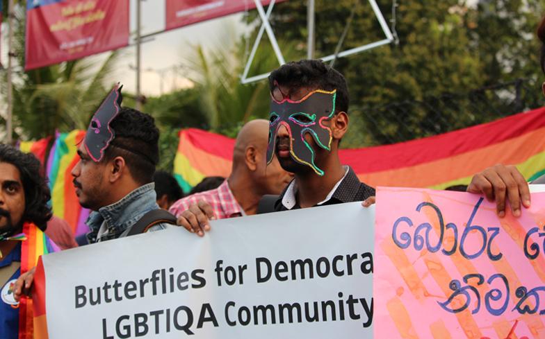 butterflies-header.jpg