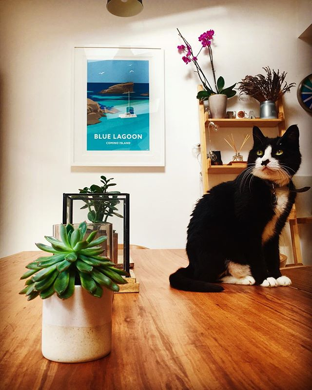 Thank you to Amanda for this beautiful image of the Blue Lagoon hanging in her lovely home in London🏡🇬🇧 featuring the cute little Shadow 😍🐈 #bluelagoon #framedprint #shadow #cat #blackandwhitecat #cute #home #london #houseofgozo #art #gallery #giftshop #gozo #malta #traveltogozo #maltagozo #maltaphotography #gozophotography #lovinmalta #visitgozo #maltaliving #seamalta #visitmaltait #lovemalta #maltalovers #maltaisamazing