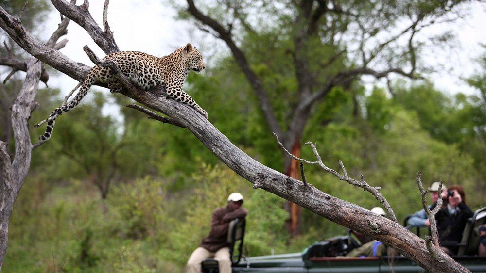 Leopard-laying-on-top-of-a-tree-in-the-kruger-national-park-1600x900 (1).jpg