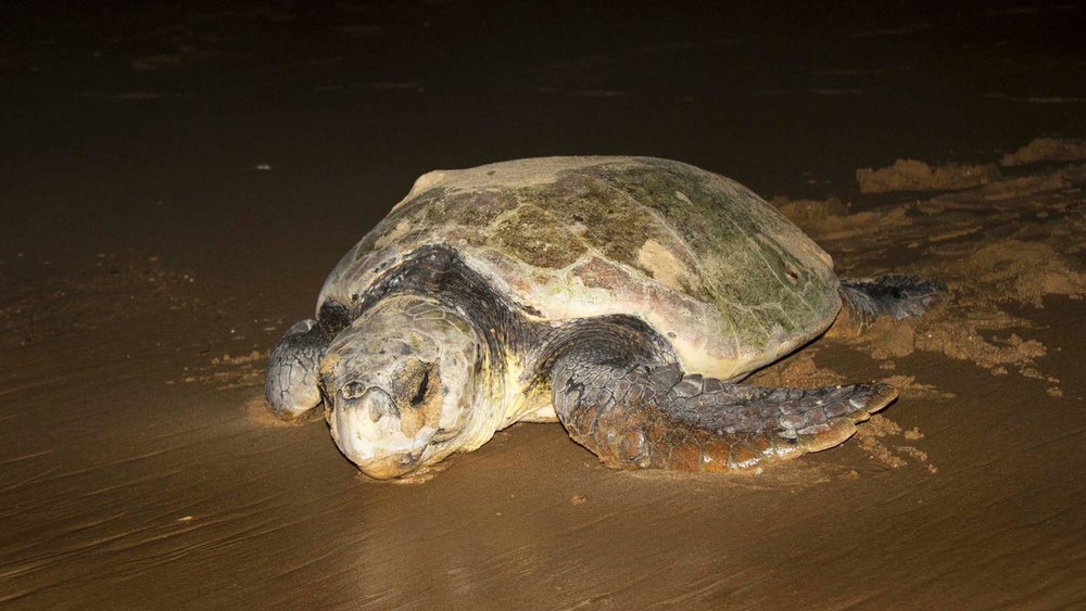 turtle-nesting-phinda-private-game-reserve-1600x900.jpg