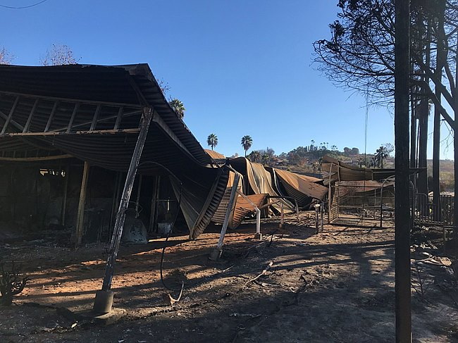 Photo via Bloodhorse.com all in all 9 barns wold be totally destroyed