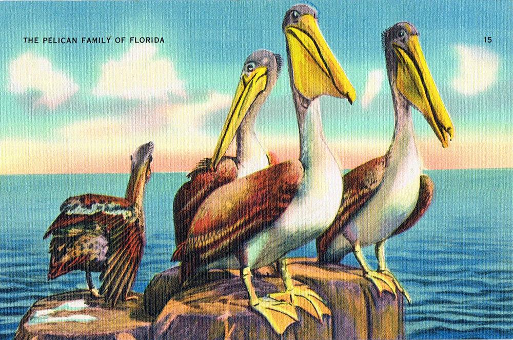 Postcard Prints — Palm Gallery & Custom Framing