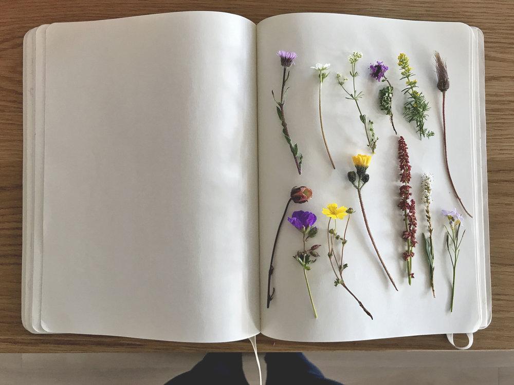 floraislands-flóraíslands-flóra-icelandic-icelandicflowers-flowers