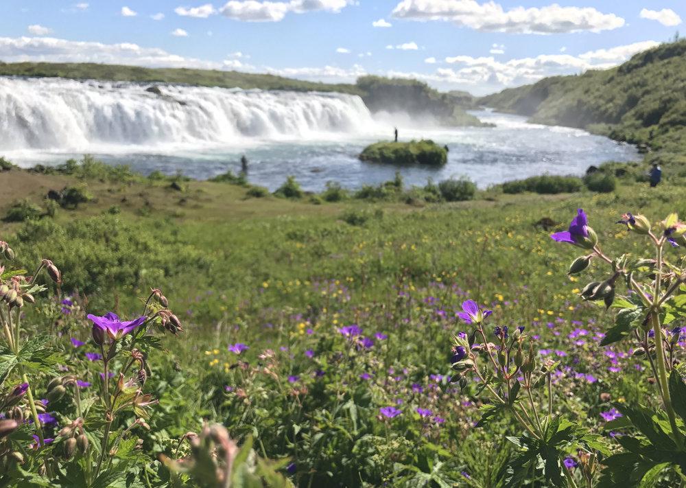 floraislands-icelandicsummer-waterfall-iceland-summer