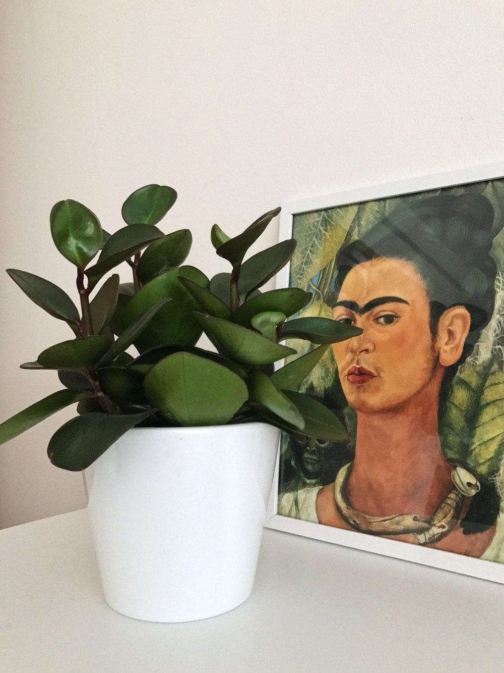 plant-easycare-plantguide-fridacahlo