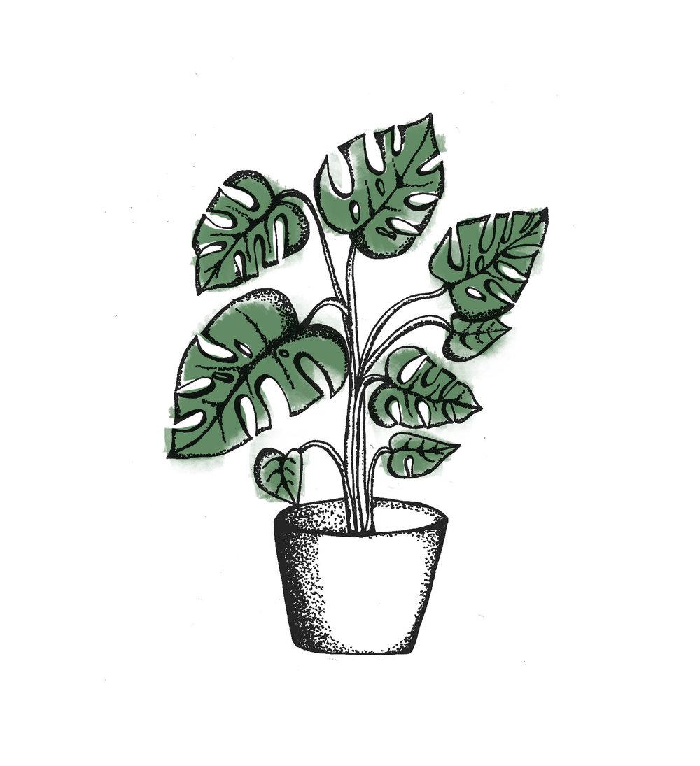 plant6-litud.jpg