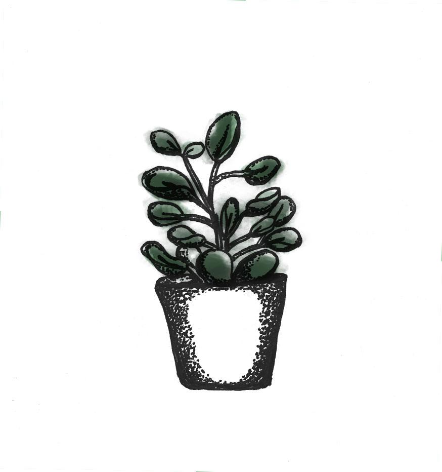 plant7-litur2 copy.jpg