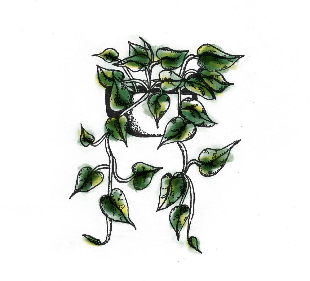 planta1_litur.jpg