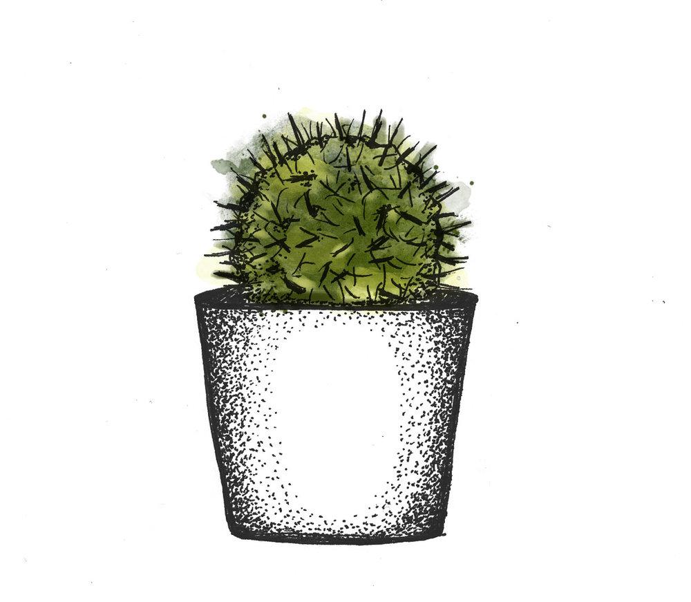 plant5_lita.jpg