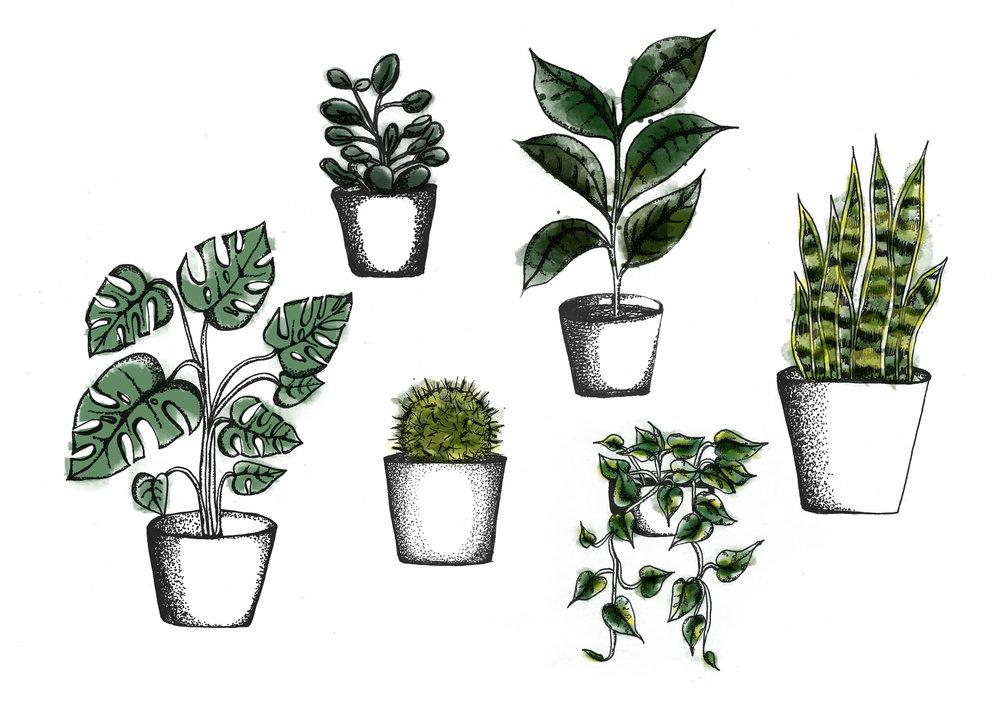 houseplants-illustration-bjorggunnars-easycare-plants