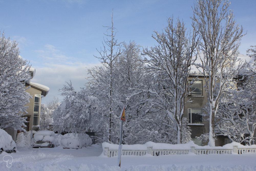 reykjavik-snow-iceland-ice-land-winter-winterwonderland