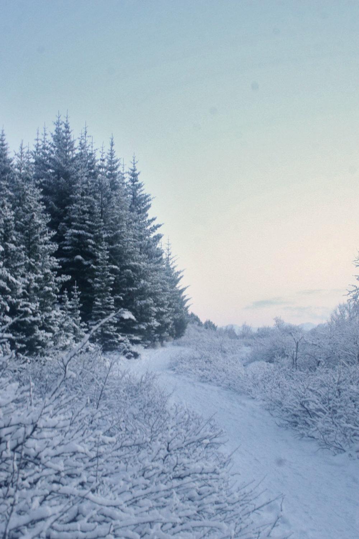 Heiðmörk-Iceland-winter-cold-snow-reykjavik