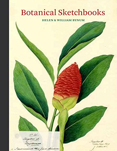 botanical-sketchbook-flower-paintings-bookguide