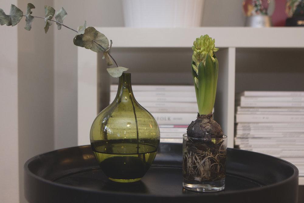 christmas-decoration-hyacinta-flower.jpg