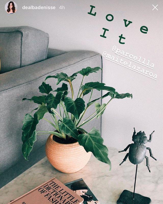 Un regalito para @dealbadenisse de parte de @parcellla porque las plantas nos hacen más felices. 💚 ¡Gracias por compartimos tu foto! ✨