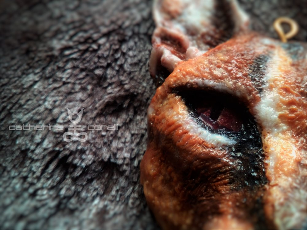 Calla The Caracal (2016) by Catherine Corelli