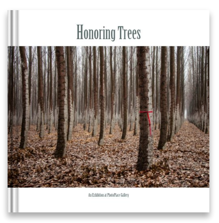 Exhibition catalog for Honoring Trees (image by Heather Binns)