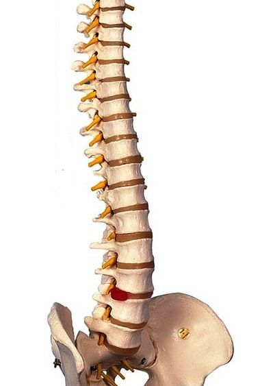 spine pic2