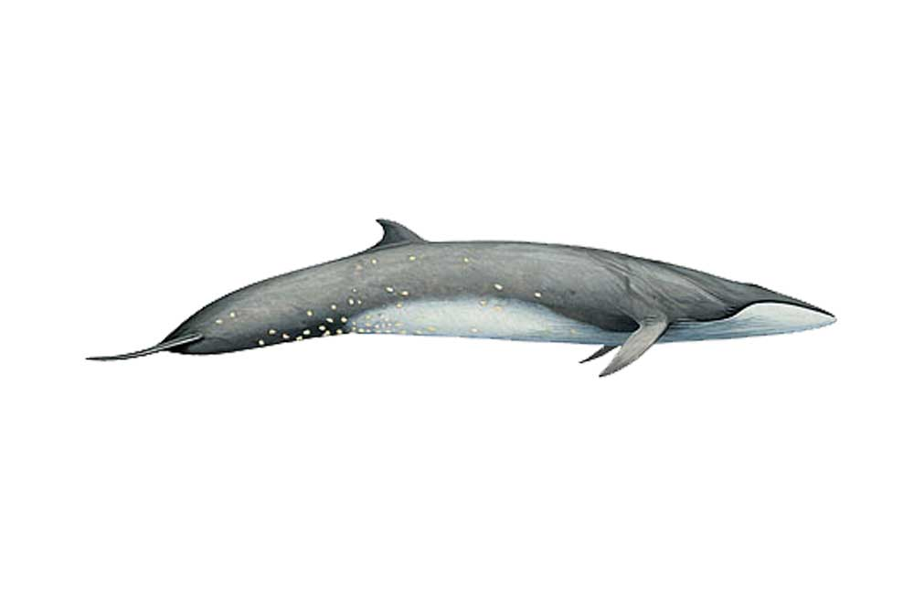 SeiWhale-Illustration.jpg