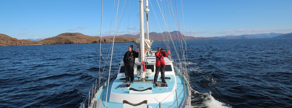 Citizen scientists on visual effort - surveying Hebridean waters for whales, dolphins and porpoises