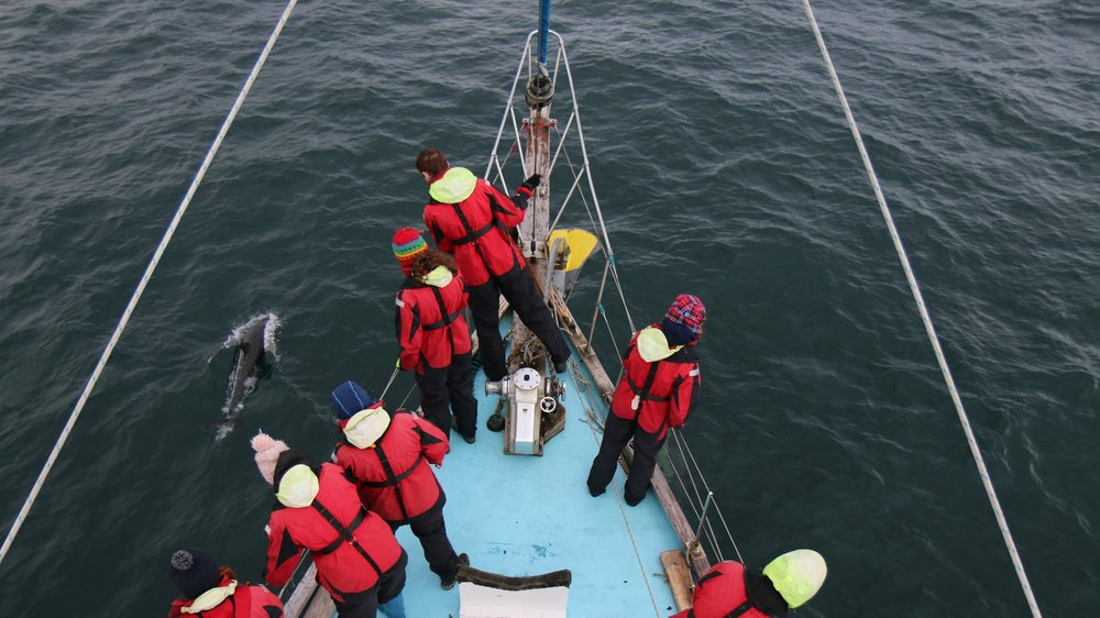 Budding conservationists spot dolphins off Scotland's west coast on a previous expedition, collecting data of vital importance.