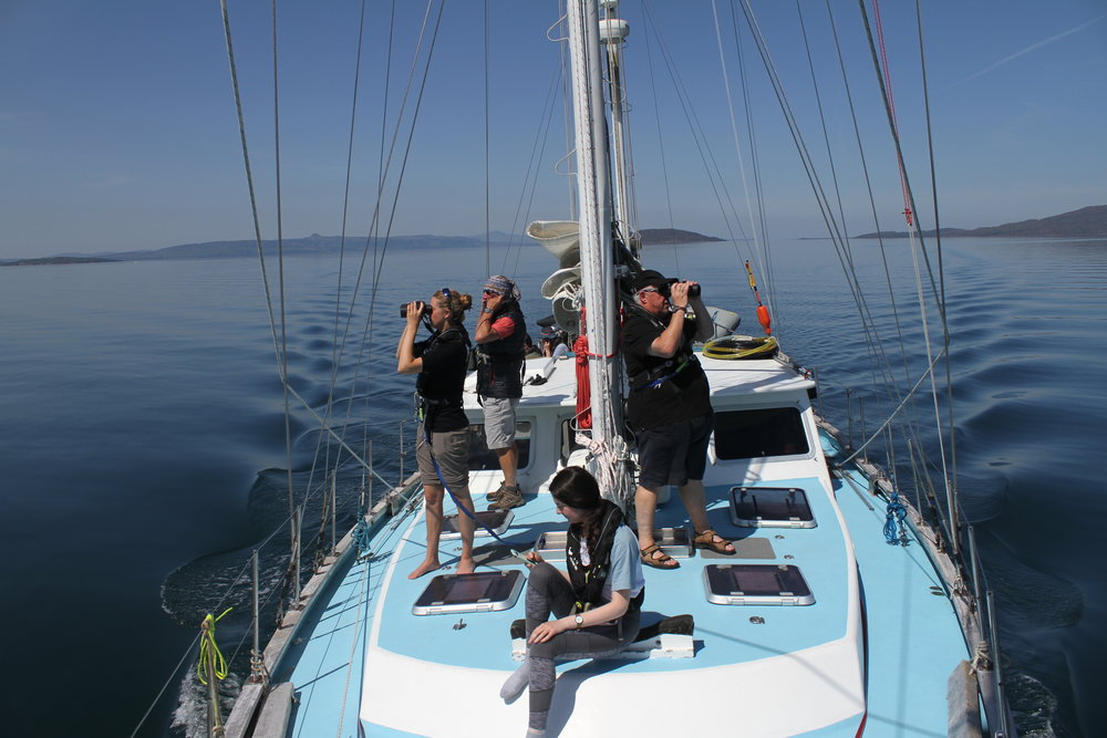 Volunteers and crew on the look out for marine wildlife as part of the scientific research.