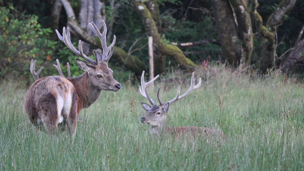 Another of Moray's fantastic photos - this time the red deer on Rum.