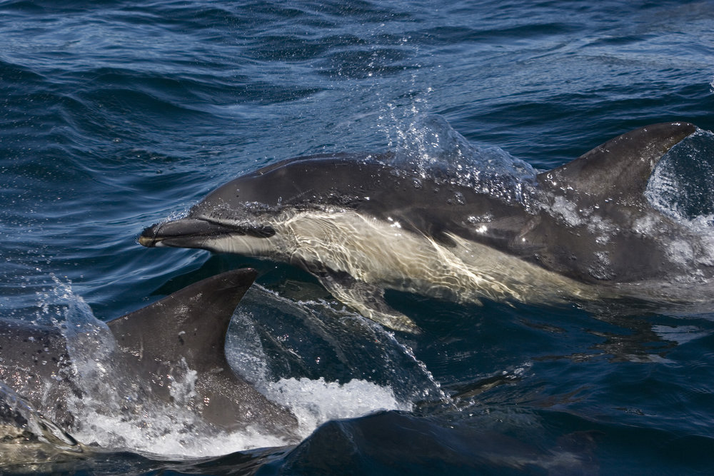 Whale Track Update — Hebridean Whale & Dolphin Trust
