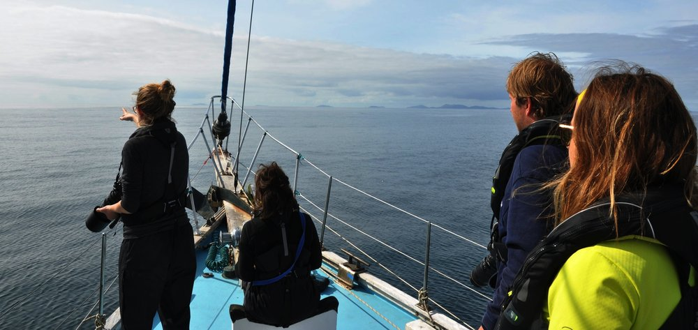 Spotting cetaceans from the bow of the boat