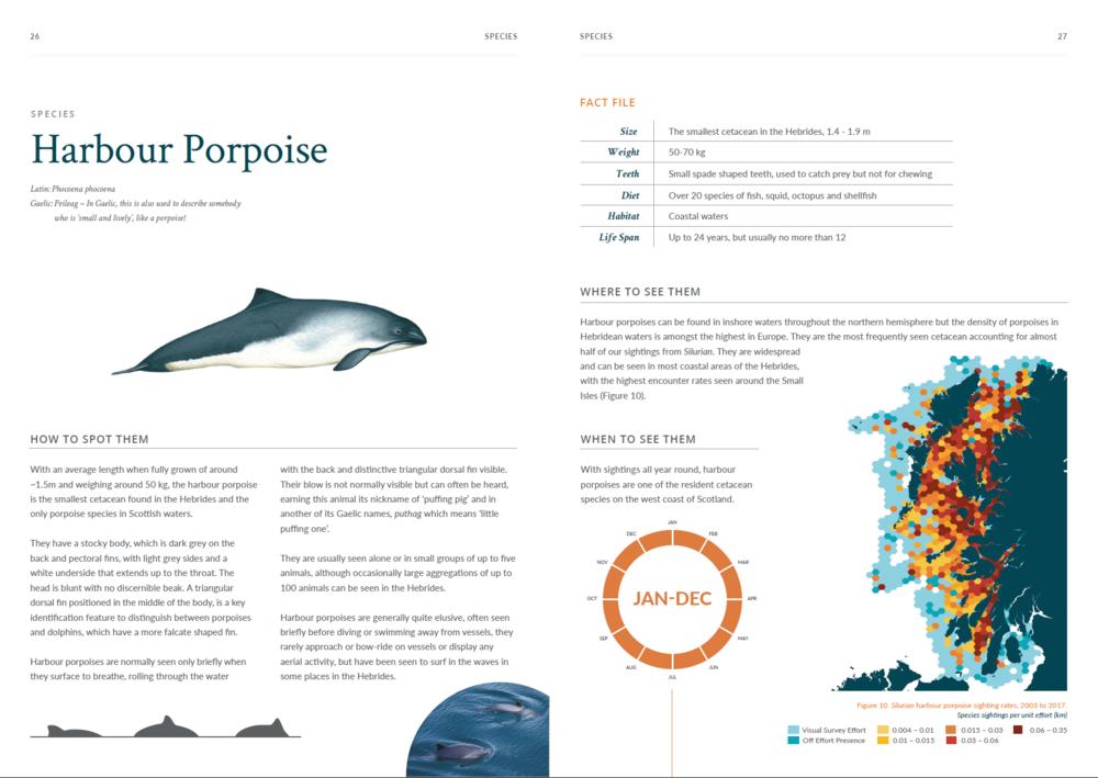 Atlas - harbour porpoise.png
